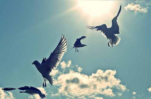 birds-clouds-photography-sky-Favim.com-495317